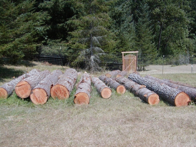 August 2013. 11 fir logs, 3 pine logs from Chezem Road neighbor