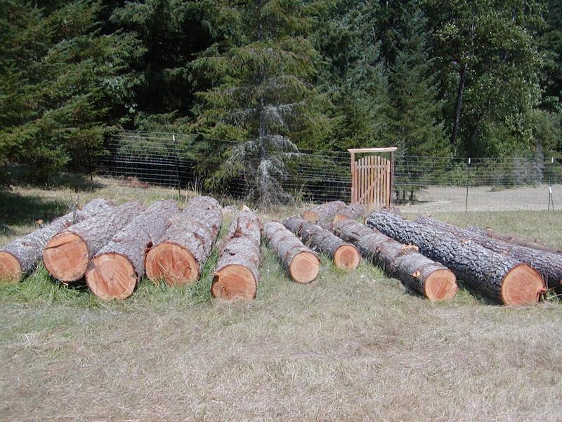 August 2013. 11 fir logs, 3 pine logs from Chezem Road neighbor