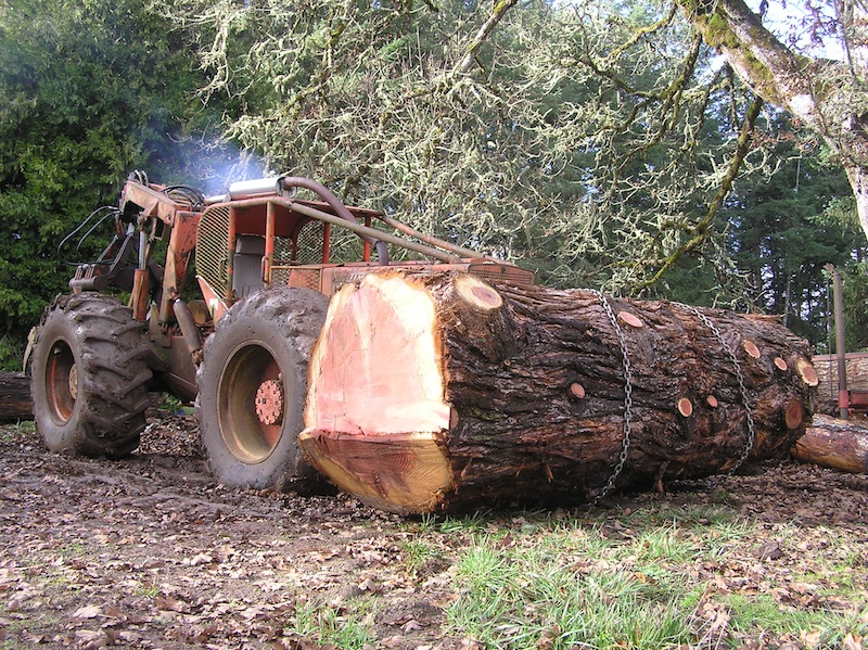 Moving a Giant Sequoia log